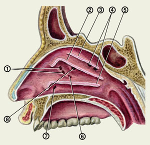 sinusitas sinusito gydymas